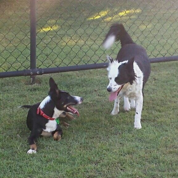 Oliver and BFF, Tess taking time out after playing with 3rd dog at dog park - 4 October 2016