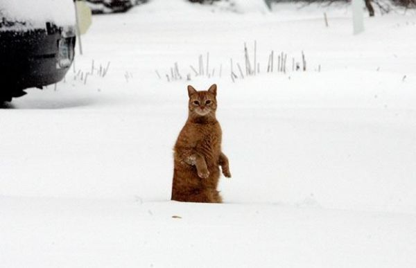 Snow Time - Daily Funny Cat Pictures from funnycatsite.com