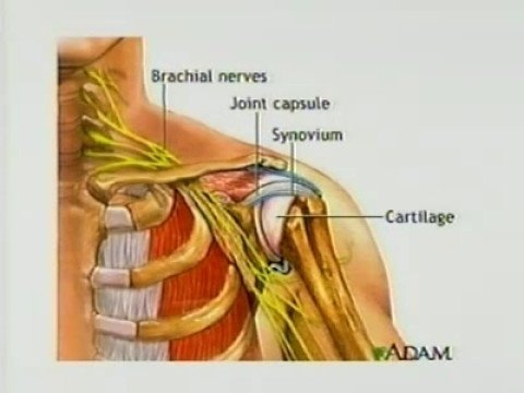 sports medicine shoulder injuries essay Sports medicine - sports injury  essay on shoulder injury diagnosis and  treatment - shoulder injury diagnosis and treatment population: vincent is a 23 .