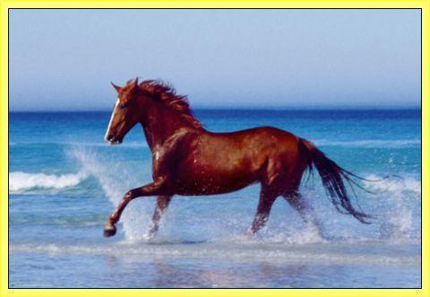 Beautiful white horses running on the beach