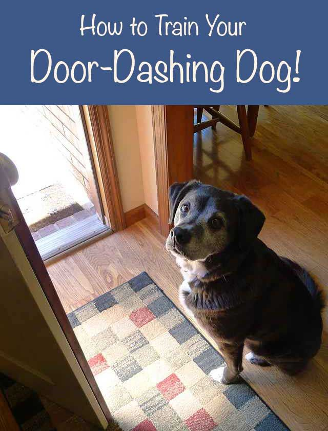 Does your dog try to escape every time the door opens? Here's some help!  #dogs #safety #dogtraining