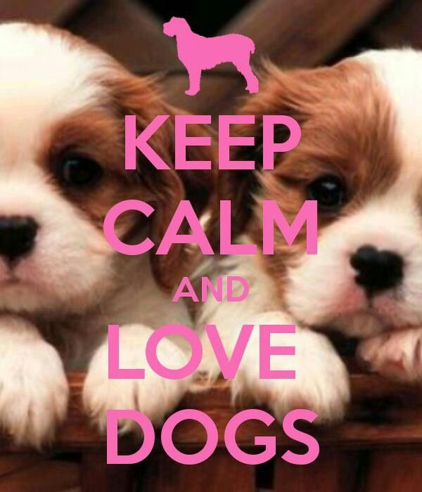 24 best images about Dogs on Pinterest | Bulldog puppies ...