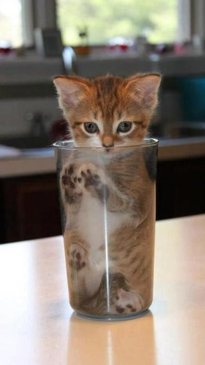 a glass of cat,,,lol