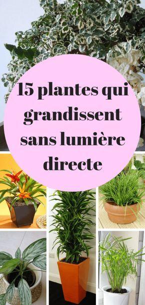 15 Plantes qui poussent sans lumière du soleil directe