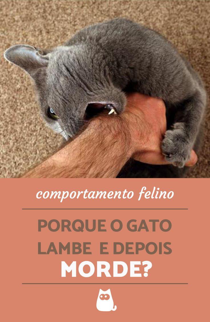Porque o gato lambe e depois MORDE? Esse comportamento comum nos felinos tem uma explicação. Entre no artigo para descobrir mais sobre essa curiosidade sobre o comportamento felino! #animais #gatos #pets #felinos #comportamento #adestramento #curiosidades