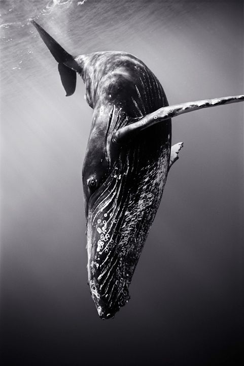 Wayne Levin has an ever-growing portfolio of stunning underwater photography.