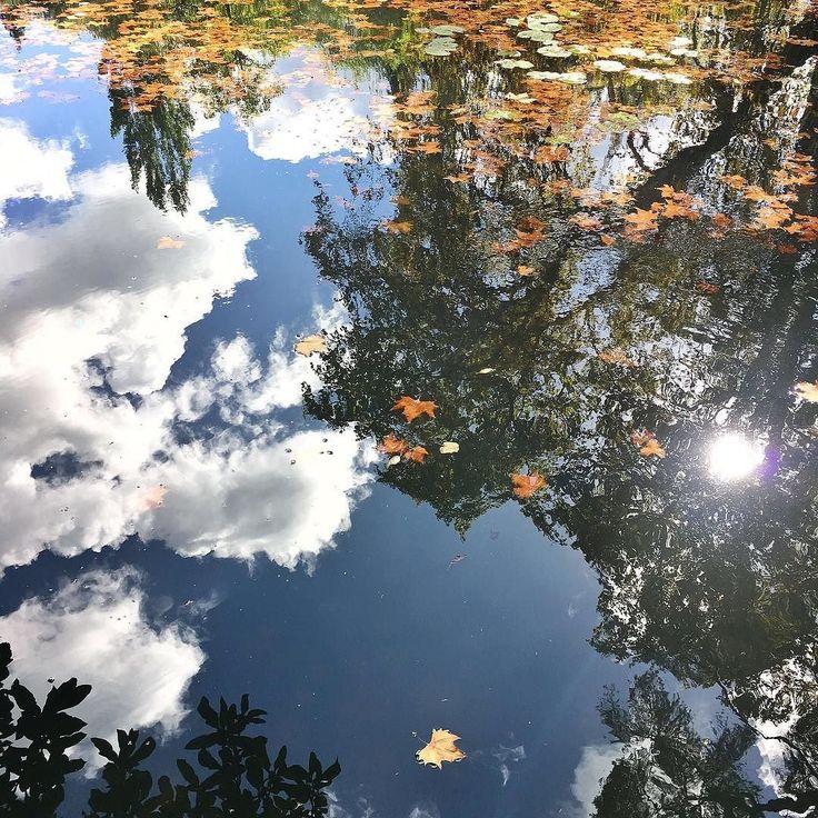 Diving into natures' Matrix. #reflections #magicpond #pond #pedroeines #thematrixisreal #coimbra #quintadaslagrimas #presstrip #batravels #beautyairlines