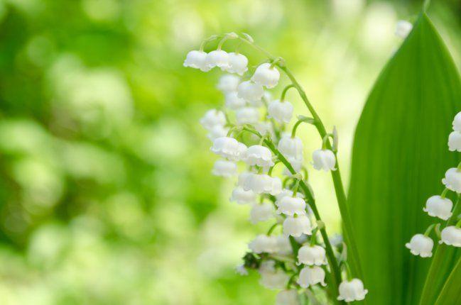 17 best images about plantas de sombras on pinterest - Plantas de sombra ...
