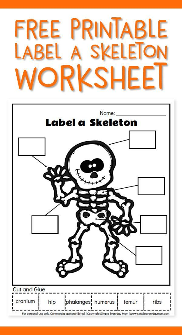 Free Printable Label A Skeleton Worksheet For Kids ...
