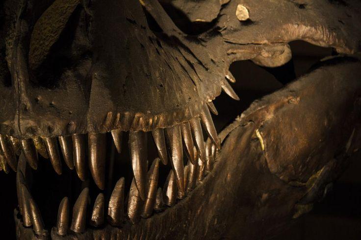 ❕ Check out this free photoBones dinosaur history london    ✔ https://avopix.com/photo/53850-bones-dinosaur-history-london    #trilobite #arthropod #invertebrate #animal #radiator #avopix #free #photos #public #domain