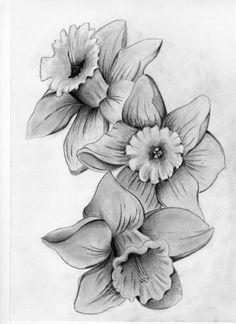 black and white drawing daffodill flower - Google Search