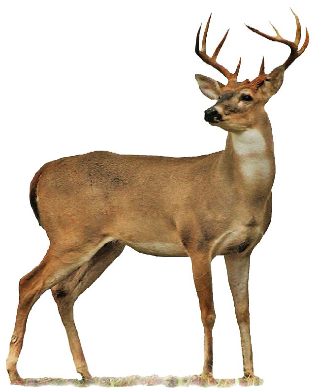 Hunting: Oklahoma Department of Wildlife Conservation