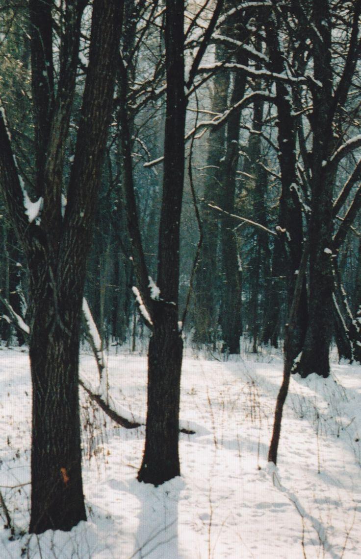 218 Best Snowy Woods Images On Pinterest Winter