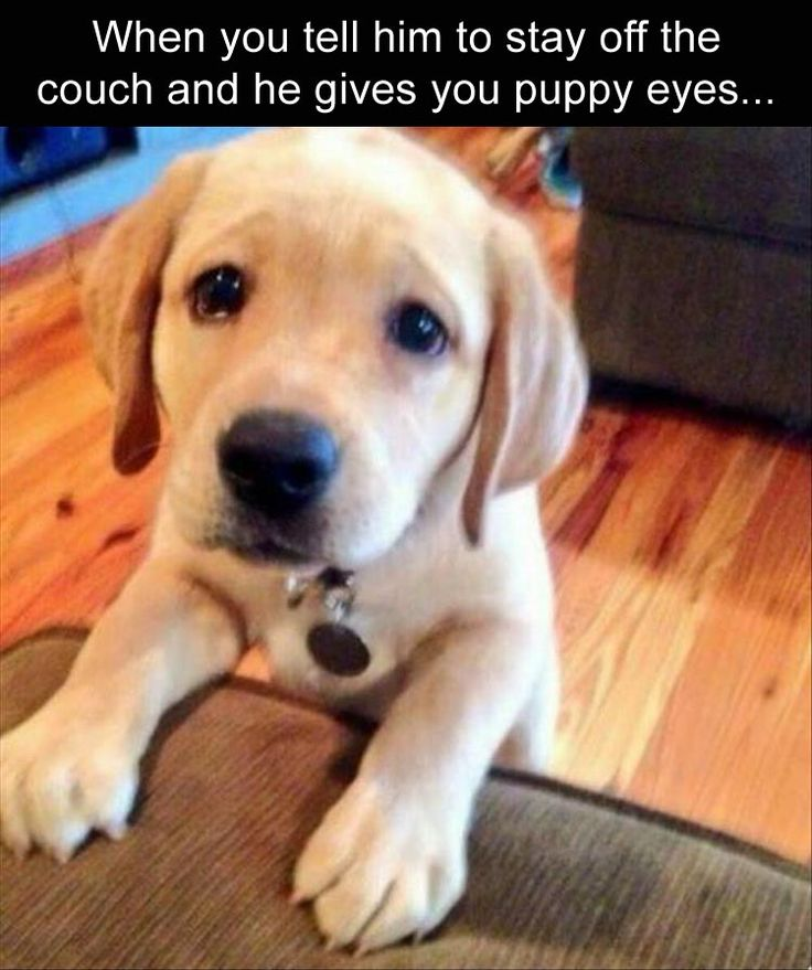 when-you-tell-her-to-stay-off-the-couch-and-she-gives-you-full-puppy-dog-eyes