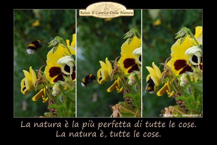 La #natura è la più perfetta di tutte le cose. La natura è tutte le cose.