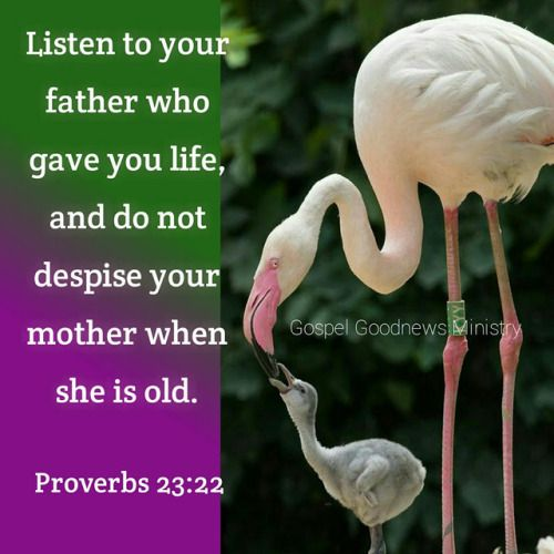 Proverbs 23:22 (ESV) -  Listen to your father who gave you life,     and do not despise your mother when she is old.