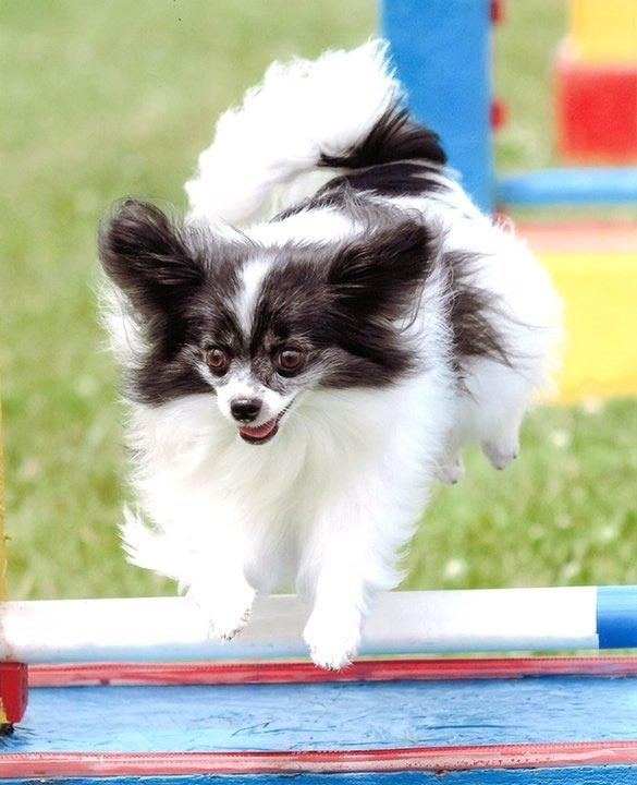 Rugby Dog Agility Show: 17 Best Images About Dogs: Dog Sports On Pinterest