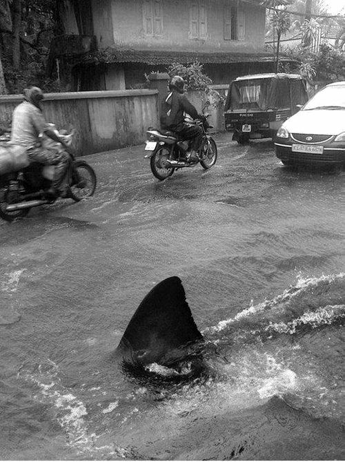 This doesn't look possible but it is. After Hurricane Irene went through Puerto Rico in 2011, a shark decided to go swimming dow… | sharks STEEZYASFUCK | Pinte…