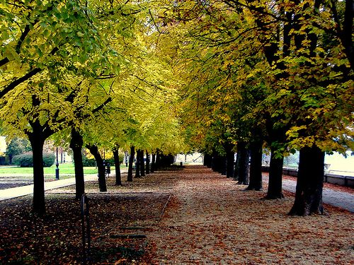 Fall in Szolnok