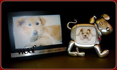 Frames - dog