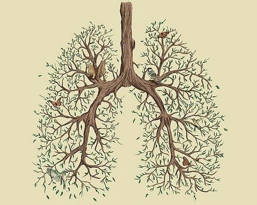 Love your body, love yourself.: Tattoo Ideas, Inspiration, Life, Tree Lungs, Tattoos, Illustration, Trees