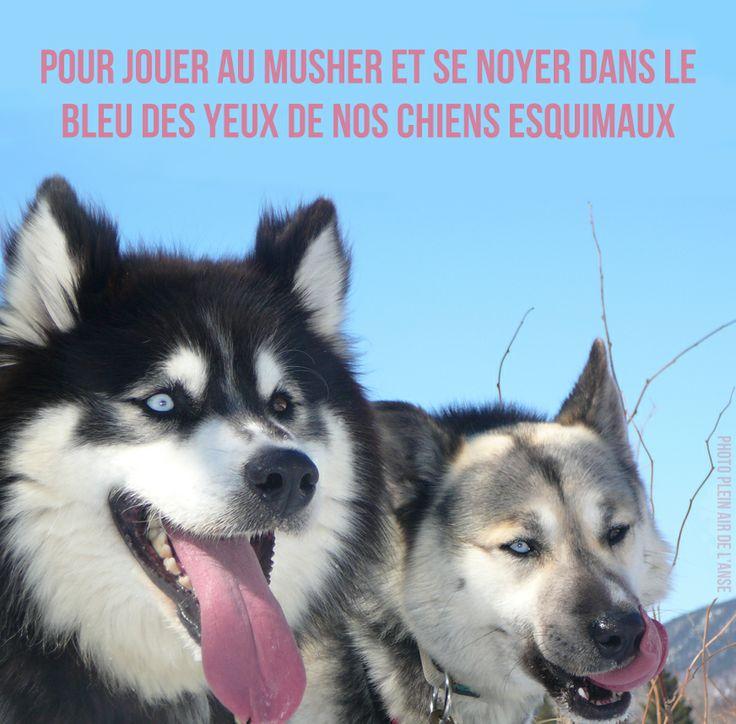 Raison 101. Si vous êtes aventurier, optez pour l'expédition de 6 jours en traineau à chiens dans les montagnes. Pour découvrir le traineau à chiens, choisissez la 1/2 journée d'initiation : http://www.saguenaylacsaintjean.ca/fr/activites/aventure-plein-air/traineau-chiens #175raisons #chien