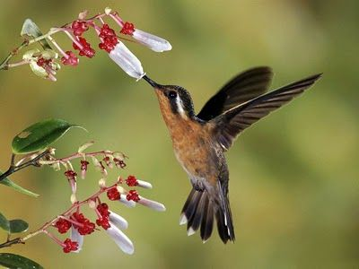 Amistad colibrí