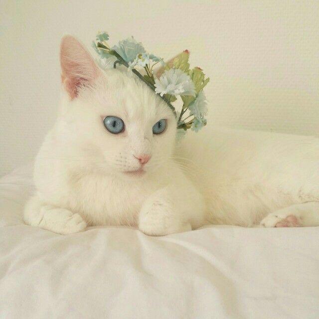 Фото с милым котиком белым
