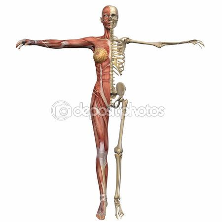 body to body cbb tank taletid