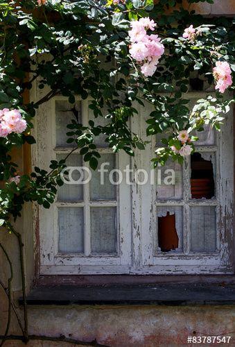 old stripped window with rose garden around