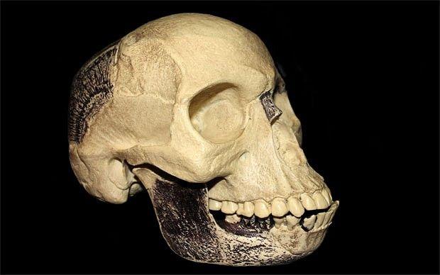 A replica of the Piltdown skull
