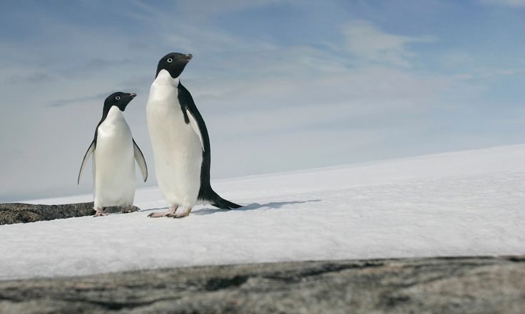 More than 100,000 penguins in Antarctica have died after a giant grounded iceberg forced them to trek 60km for food