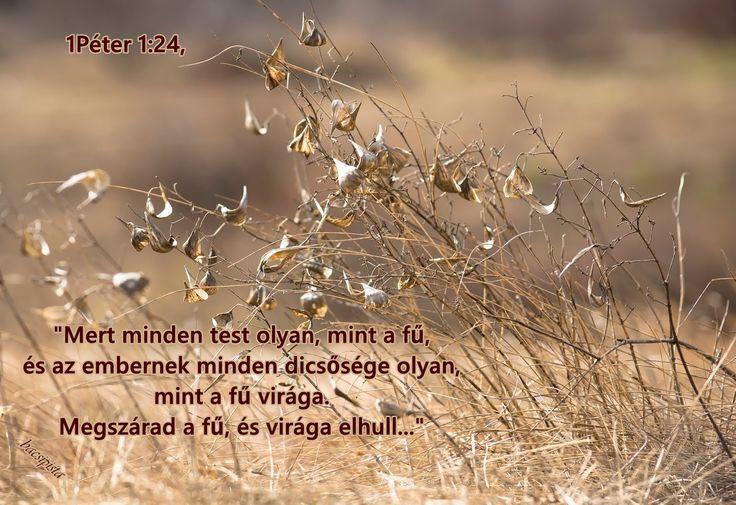 """""""Mert minden test olyan, mint a fű, és az embernek minden dicsősége olyan, mint a fű virága. Megszárad a fű, és virága elhull..."""" (1 Pét. 1.24)"""