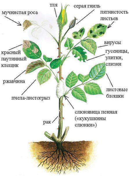 gardenmy.ru