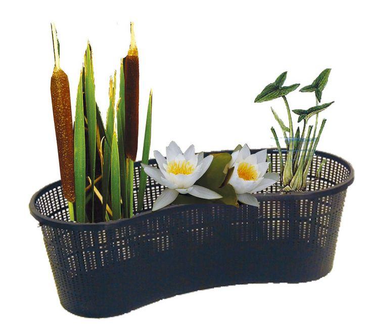 Jazierko v črepníku | Kvety a Záhrada