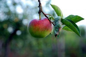 Naturen er efterårets skattekammer