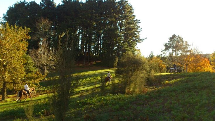 Could be a postcard! #beautiful #landscape #madeira #horse #horsebackriding #pferd #cheval #paysage #landschaft #reiten