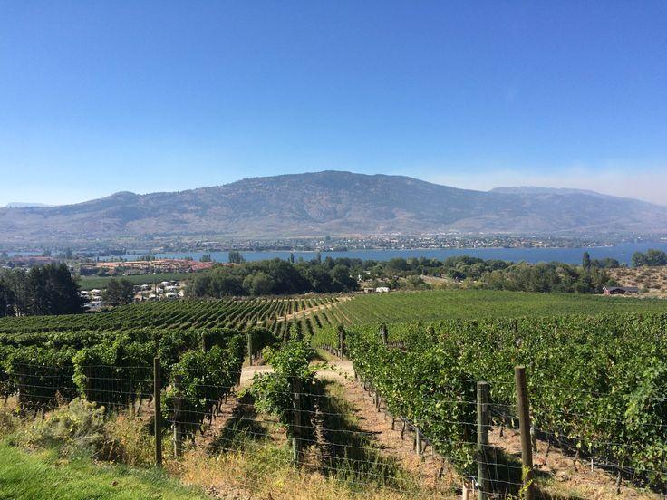 Vineyards in Osoyoos, BC