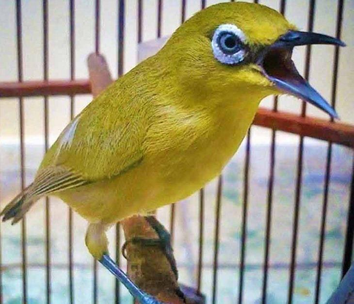 Pentingnya Nutrisi Untuk Pleci Bagi Proses Pertumbuhannya Burung Burung Kolibri Burung Kecil