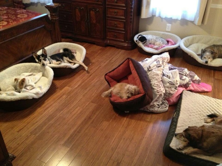 No chew dog bed Great Ideas Pinterest