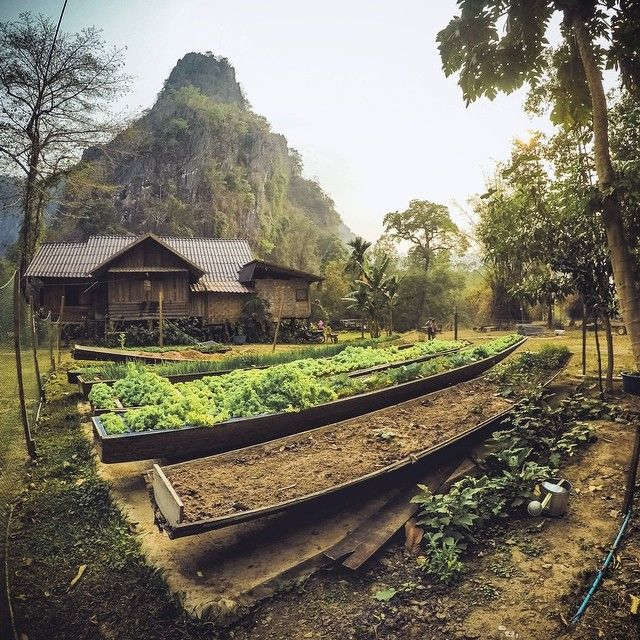 The organic garden growing in old dug out canoes at a guesthouse we stayed at at…                                                                                                                                                                                 More