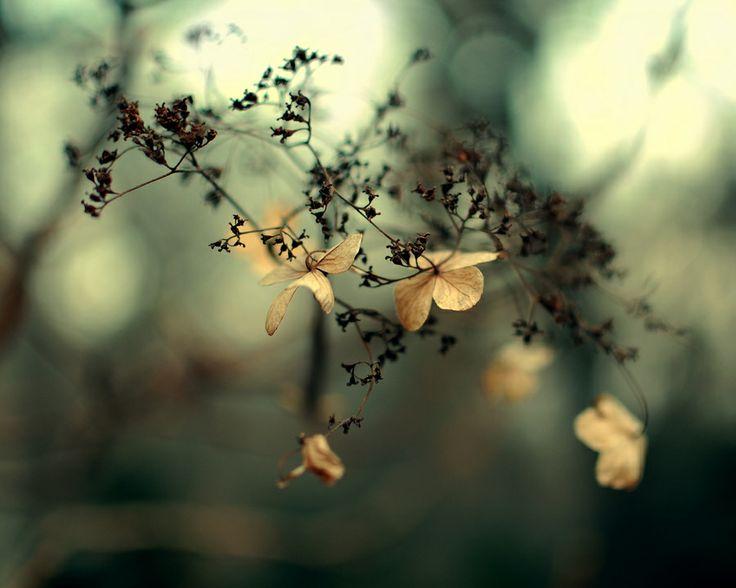Untitled by Allana Mayer, via 500px