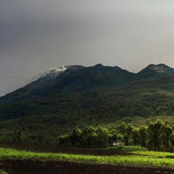Gerry Newan: view di pagi hari Gn. Welirang di Jatim dari perkebunan disekitar kaki gunung