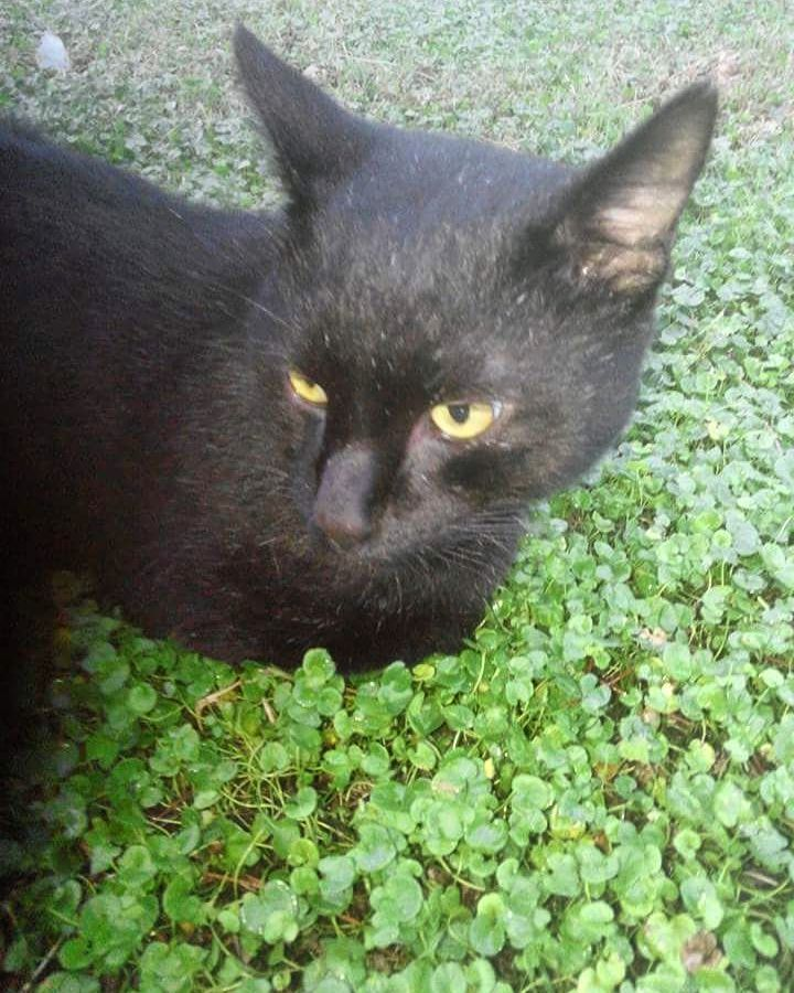 #kedidelileri #kedi #catstagram #catlover #pisi #turkeycat #sarman #tekir #kity #kediseverler #catlovers #kediasiklari #blackcat #karakedi #sokakkedisi #streetcat #streetcats #cat #cats #kediler #kedileralemi #kedisizhayatcokbayat #kedisizolmaz #whitecat #whitecats by kedidelileri http://www.australiaunwrapped.com/