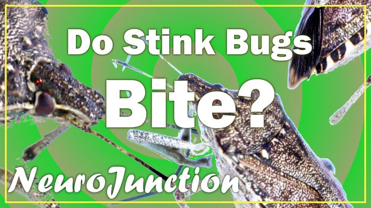 Do Stink Bugs bite?  This video will answer this question and more!