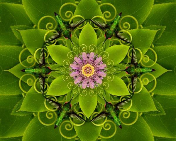 A kindred spirit. I love the humming birds.  passion flower mandala
