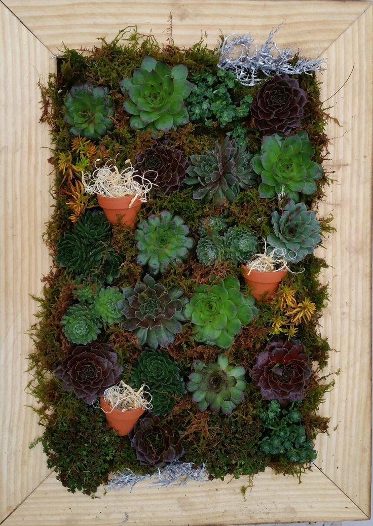 17 beste ideeën over Balkon Planten op Pinterest - Tuinplanten ...