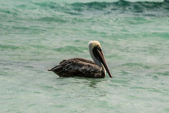 PELICAN BIRD nautical digital download Instant by Turtlesandpeace