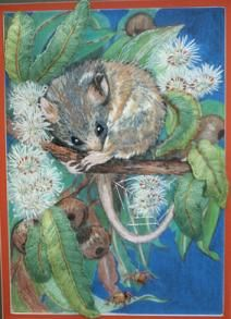 Playing Possums by Catherine Howell