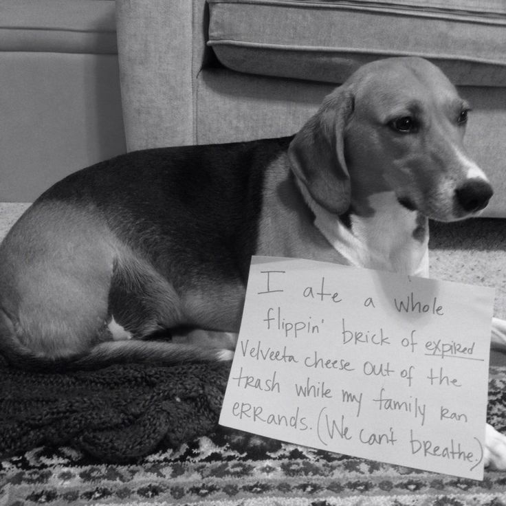 Dog Ate Some Rug: 4539 Best Dog Shame Images On Pinterest